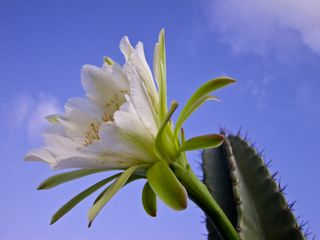 Cactusflowers-2