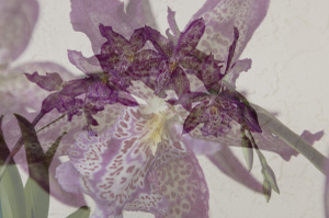 Orchid_collage1