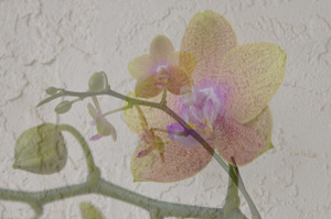 Orchid_collage2
